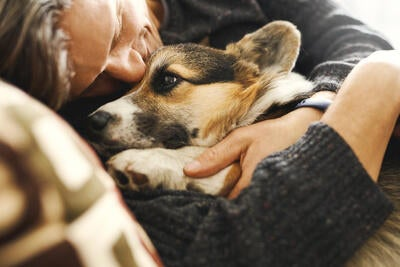 Canine Coronavirus Vaccine and COVID-19 Image